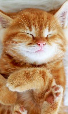 Napping kitten