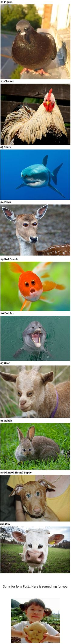 What Different Animals Would Look Like If Their Eyes Were At The Front. - 9GAG