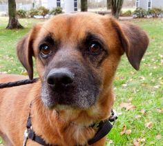 Crate Trained Dog Seattle