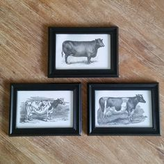 Framed Cow Prints