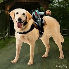 If your pet won't sit still for a full costume, you can still dress him up for Halloween with a Ride On costume!