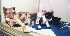 Hero Cat Walks Through Fire Five Times To Rescue Her Kittens #cat_save_kittens_from_fire, visit the page..