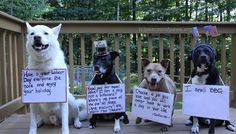 Happy Labor Day!  www.peaceandpaws.org Paws Rescue, Happy Labor Day, Labrador Retriever, Dog Cat, Cute Animals, Pets, Doggy Stuff, Earth, God