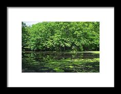 oak openings, swanton, ohio, landscape, lake, nature, landscape, michiale schneider photography, interior design, framed art, wall art