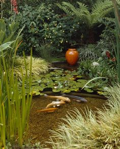 Water lilies and graceful koi give this Zen water garden the relaxing feel of a spiritual sanctuary. It's the perfect spot to discover a moment of quiet contemplation.