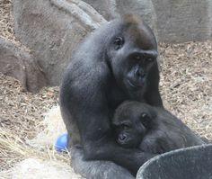 Mama & Baby @ Franklin Park Zoo, Boston, MA