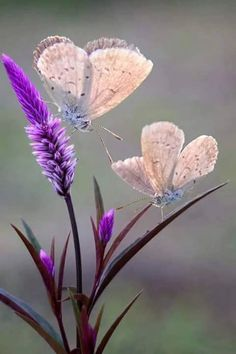 This photo would make a lovely painting, purple flowers and butterfly. Beautiful Bugs, Beautiful Butterflies, Amazing Nature, Beautiful World, Beautiful Flowers, Beautiful Things, Beautiful Dream, Simply Beautiful, Butterfly Kisses