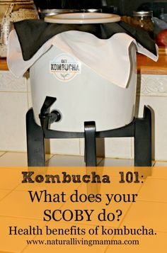 Kombucha 101 What does your SCOBY do? The health benefits of Kombucha Kombucha Recipe, Kombucha Tea, Kombucha Benefits, Health Benefits, Nutrition Articles, Health And Nutrition, Water Kefir, Homeopathic Remedies, Fermented Foods