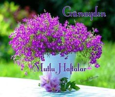 Günaydın mutlu haftalar Daily Thoughts, Cool Words, Feel Good, Good Morning, I Am Awesome, Diy Projects, Herbs, About Me Blog, Tumblr
