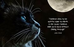 """""""O Grito do Bicho"""": Gatos neutralizam energias negativas ou as colocam..."""