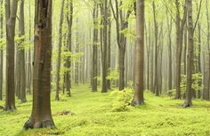 traditional-tree-forest-plain