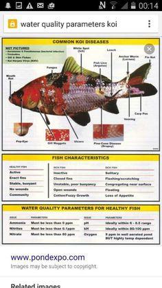 Koi Fish Care, Fish Tank For Sale, Animals Information, Koi Art, Beta Fish, Beautiful Fish, Exotic Fish, Freshwater Fish, Aquaponics