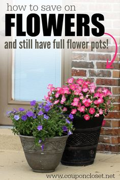 How to Save on Flowers for your Garden - check out my one tip to have full and beautiful flowers in my flower pots or garden for less!