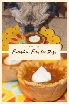 DIY Mini Pumpkin Pies for Dogs - Perfect for Thanksgiving! Dog Pumpkin, Mini Pumpkin Pies, Pumpkin Dog Treats, Mini Pumpkins, Homemade Peanut Butter, Homemade Dog Treats, Healthy Dog Treats, Doggie Treats, Dog Biscuit Recipes