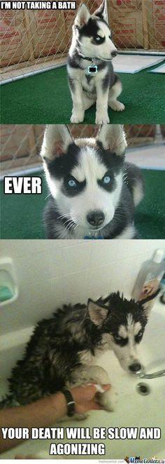 Husky bathtime