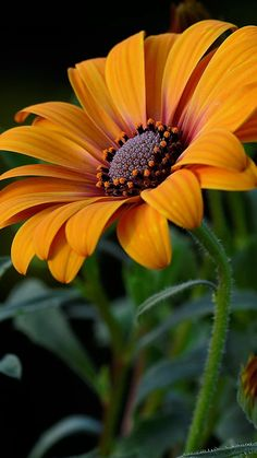 You can enjoy your garden all year round when you learn how to create an indoor flower garden. Flowers are … Beautiful Flowers Photos, Exotic Flowers, Orange Flowers, Amazing Flowers, Pretty Flowers, Illustration Blume, Beautiful Meaning, Indoor Flowers, Nature Plants
