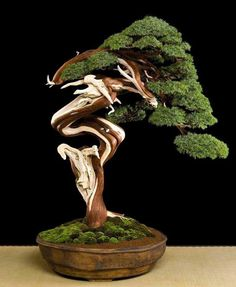 Bonsai goalllssss. I really would love to achieve a beautiful art as such. Step by step