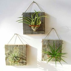 TOP 10 Beautiful Air Plant Decorations - Top Inspired