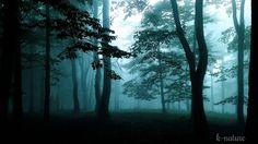 Forêt la Nuit - Sons Naturels: Grillons Hiboux Pluie Vent - Ambiance Rel...