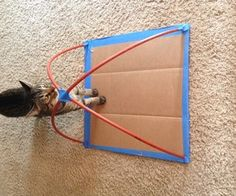 DIY cat tent-all know the cats need a tent. The beds, chairs and heating grates are not enough. :)