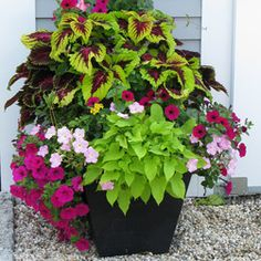 lamium containers - Google Search