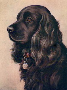 COCKER SPANIEL BLACK DOG HEAD STUDY LOVELY 8 X 10 DOG PRINT READY TO FRAME