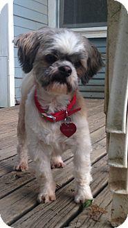 Conway, AR - Shih Tzu. Meet Einstein, a dog for adoption. http://www.adoptapet.com/pet/12907761-conway-arkansas-shih-tzu
