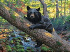 """Lazy Boy Bear 1000 piece Jigsaw Puzzle    SunsOut Jigsaw Puzzles will provide a challenge for one and all.    Perfect for collectors to mat and frame.    Art by Mark Keathley    Size: 20"""" x 27""""    Made in the USA, by SunsOut.    Eco-Friendly, Soy Based Inks & Recycled Board.    Recommended Ages: All    Consumer Product Safety Notice:  WARNING: CHOKING HAZARD  Small parts Not for children under 3 years      SO52986  Regular price: $16.00  Sale price: $14.40"""