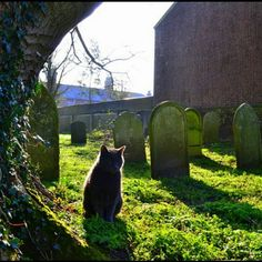 Lonely cat in a graveyard