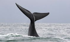 52 Hertz: The Loneliest Whale in the World