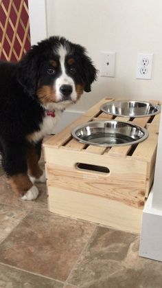 Using a crate as a raised dog feeder. I would love to have one like this but stained a darker color. Diy Pour Chien, Raised Dog Feeder, Raised Dog Bowls, Dog Bowl Stand, Dog Crate, New Puppy, Dog Houses, Dog Bed, Dog Life