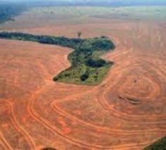 Brésil: la déforestation de l'Amazonie en hausse de 29% entre 2012 et 2013