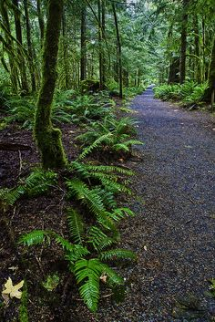 Trail of Cedars in North Cascades National Park - via Flickr