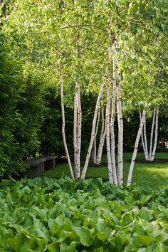 Landscape Winner: Alice Cooke Design Associates, LLC