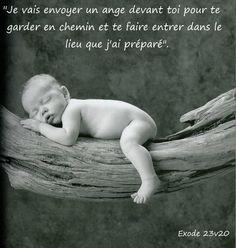 Cadre bébé sur arbre