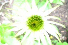 My garden, summer 2011