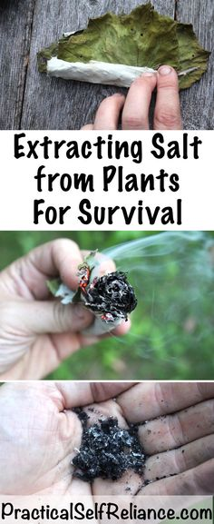 Extracting Salt From Plants for Survival Related posts:The Best of Bushcraft and Survival -. - Survival Skills for Kids to Teach Them ASAP Survival Life Hacks, Survival Supplies, Survival Food, Homestead Survival, Wilderness Survival, Camping Survival, Outdoor Survival, Survival Prepping, Emergency Preparedness