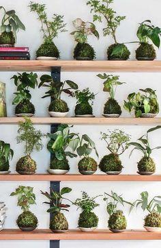 Kokedama: What it is, Amazing Arrangements to get inspired Hanging Plants, Indoor Plants, Moss Plant, String Garden, Chicken Garden, Deco Floral, Garden Trellis, Container Flowers, Cool Plants