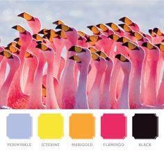 Nature's Graphics