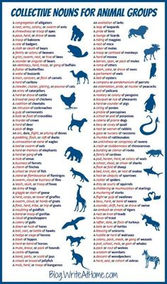 Collective Nouns Animal Group Names #animals #languagearts