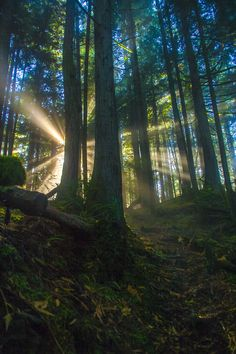 Tiger Mountain, Washington State, US Hiked! Beautiful World, Beautiful Images, Landscape Photography, Nature Photography, Forest And Wildlife, Walk In The Woods, Winter Trees, Looks Cool, Science And Nature