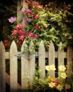 Garden Photograph  Wooden Gate Flowers Clematis by FirstLightPhoto