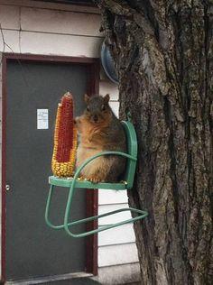 Squirrel feeder for landscape in front yard.