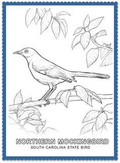 South Carolina State Bird Coloring Page