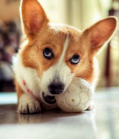 Are you looking at my ball?