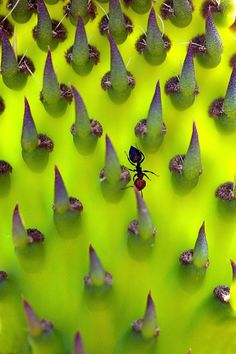 Micro photo of an ANT travelling the expanse of a CACTUS