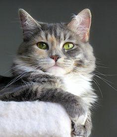 beautiful cat portrai