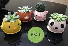 Animals by Pot Chic Pedidos: pot.chic@mail.com  #suculentas #suculenta #succulents #potchic #pot_chic #cactos #suculentasycactus