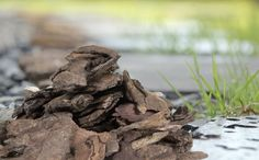 How to Compost Wood Chips Fast | Prepper Universe