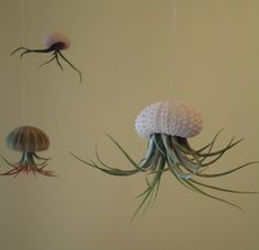 GIFT BOXED Tiny Tillandsia Air Plant Hanging Sea Urchin, Sea Shell Living Ornament by SucculentDESIGNS on Etsy https://www.etsy.com/listing/107429100/gift-boxed-tiny-tillandsia-air-plant